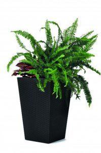 17192300-rattan-style-planter-small-3022-rgb
